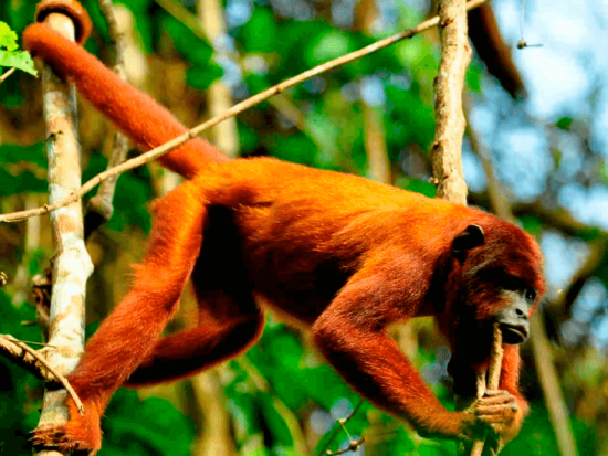 TAMBOPATA MONKEY ISLAND 3 DAYS